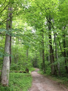 Maddron Bald Trail, Great Smoky Mountains National Park