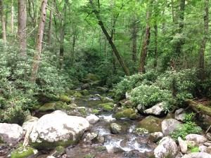 Otter Creek Tributary on Maddron Bald Trail