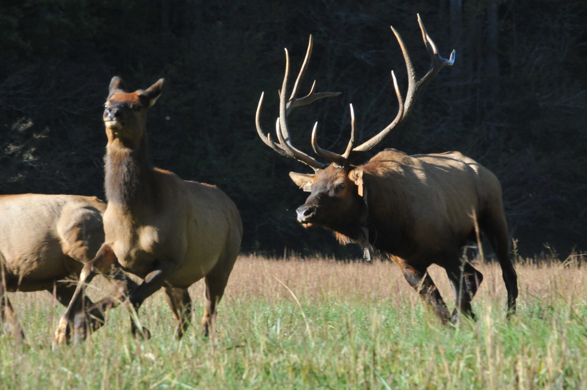 Elk, G N Price Photography