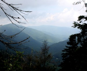 View from near top of Chimney Tops Trail. Photo by Julie Dodd