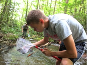 collecting dragonfly larvae