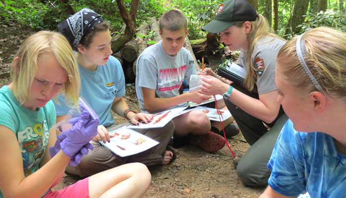 Dragonfly Mercury Project with high school interns