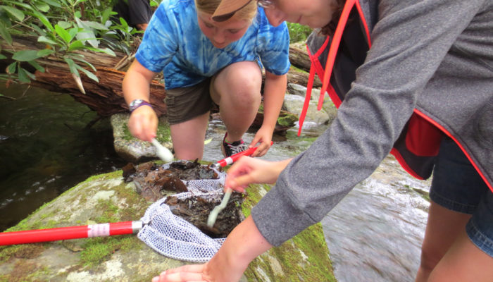 examining Dragonfly larvae