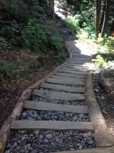 Black Locust and rock stairs