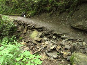 Alum Cave Trail before