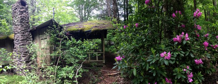 Elkmont cottage with rhododendron - photo by Julie Dodd