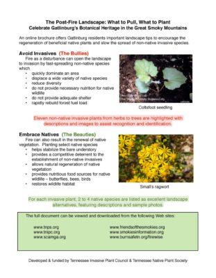 invasive plants guide