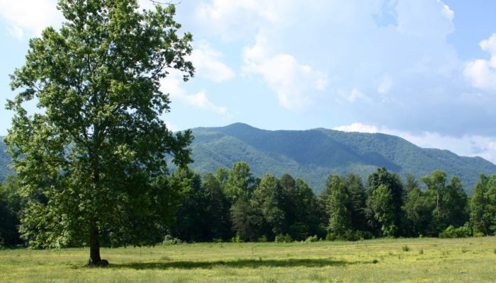 Cades Cove view - photo by Julie Dodd