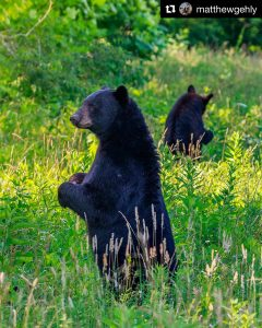 2019 Park Support – Friends of the Smokies