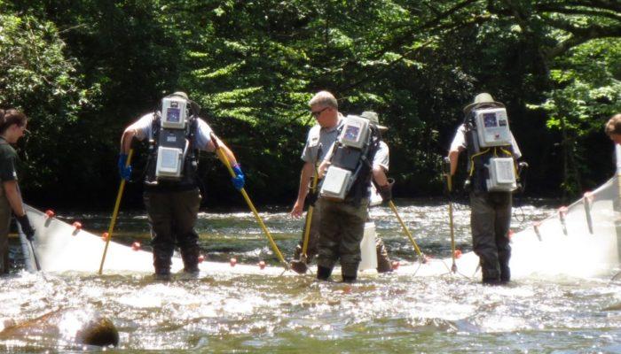 electrofishing survey in GSMNP