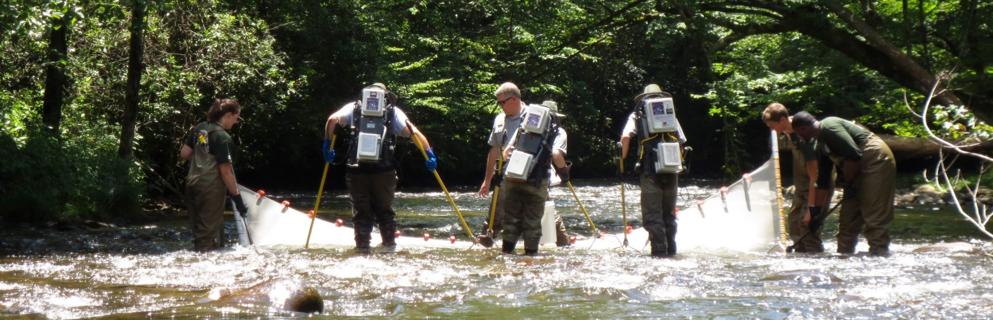 electrofishing survey in GSMNP