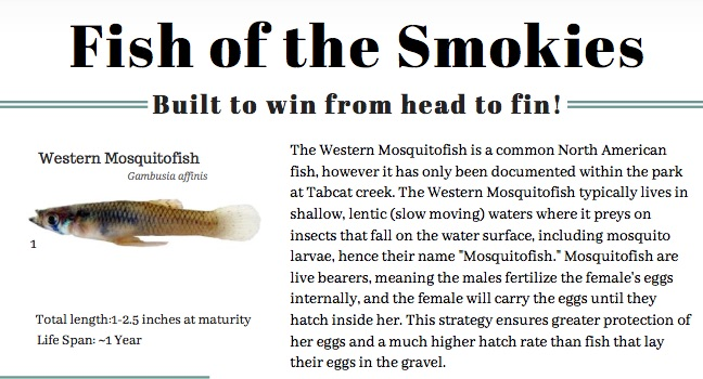 Fish of the Smokies article