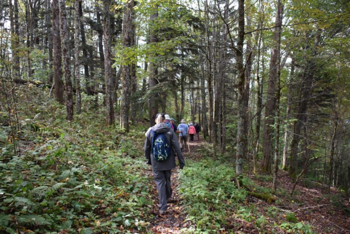 hiking Flat Creek Trail in GSMNP
