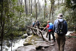 Hikers crossing log bridge on Porters Creek Trail