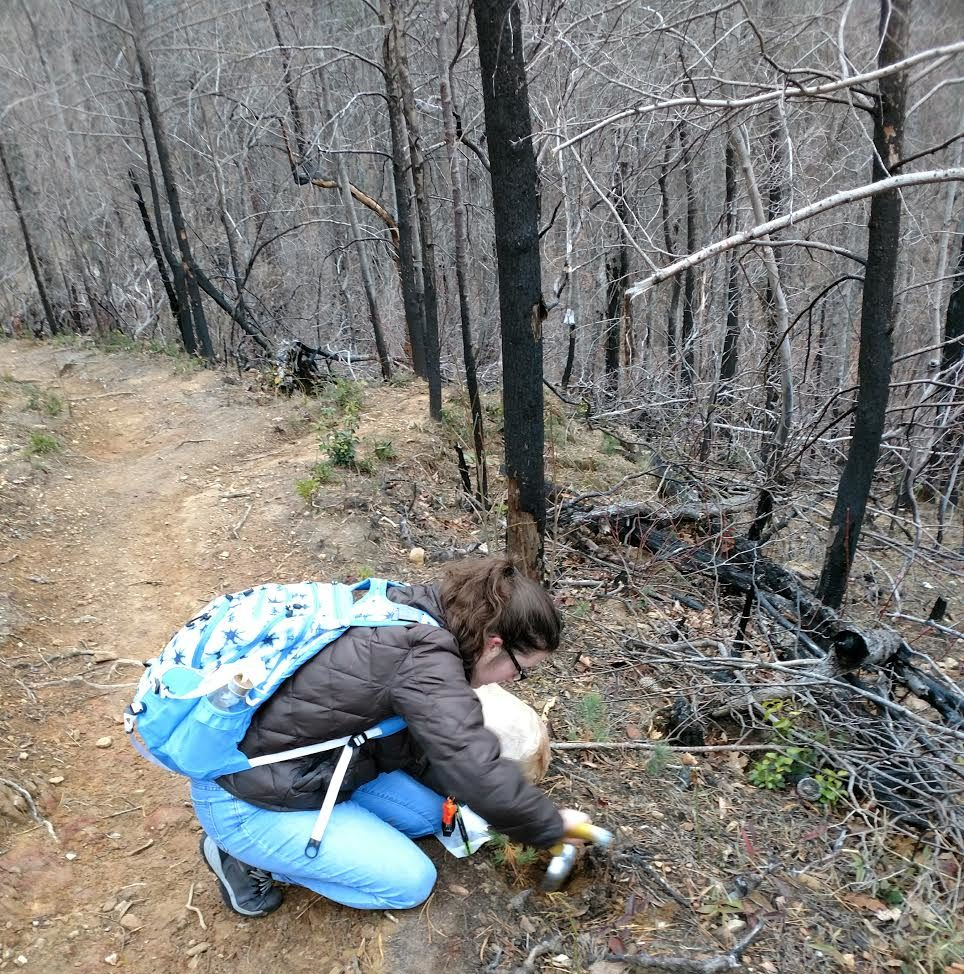 Alexis Case studies fungi and pine seedling