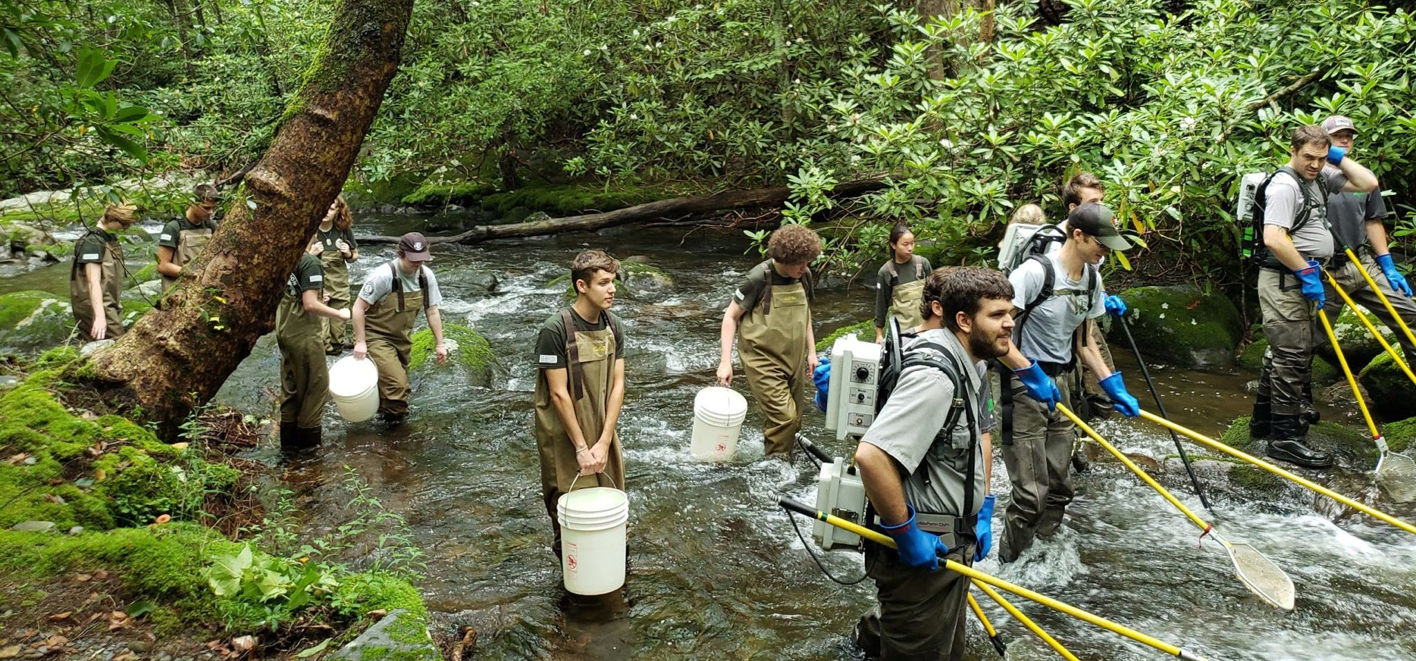 electrofishing in GSMNP Middle Prong