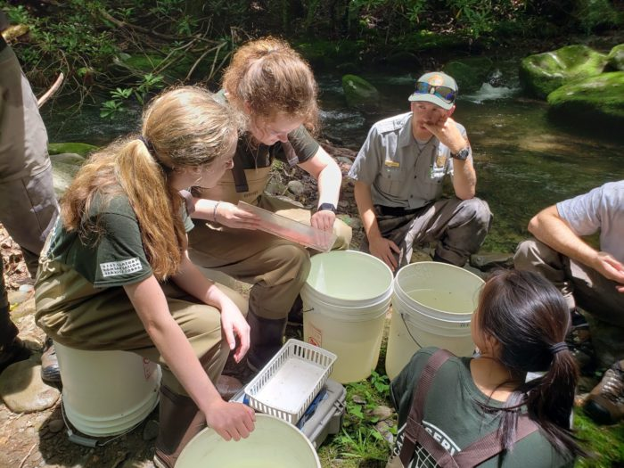 GSMNP interns measure fish