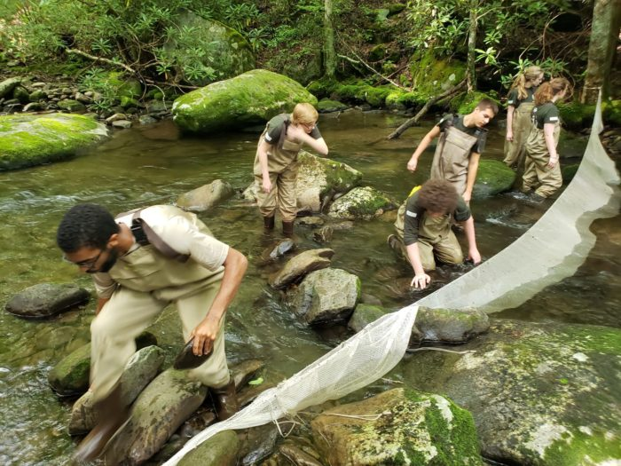GSMNP interns set up nets in Middle Prong