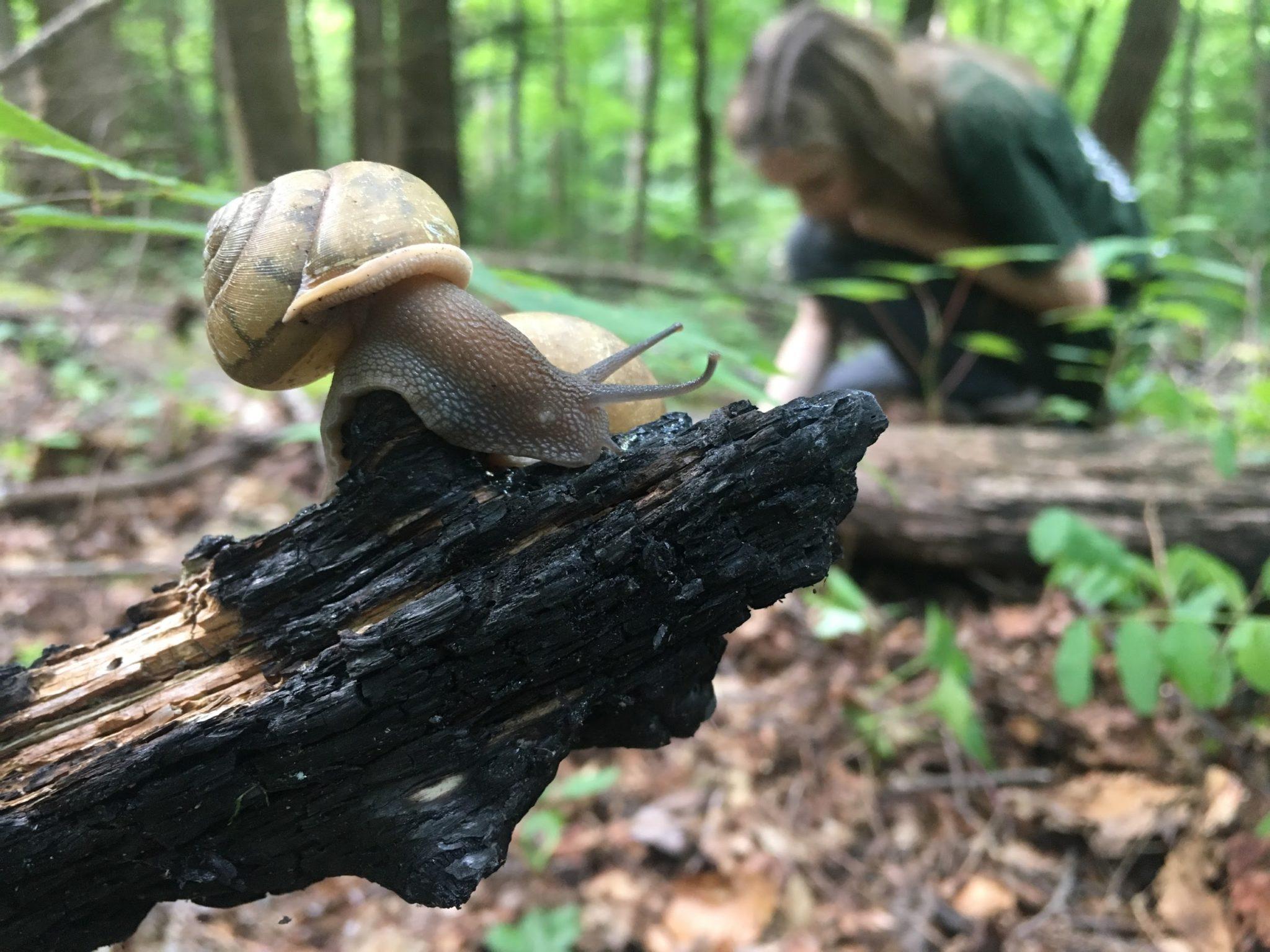 snail in burn zone in GSMNP