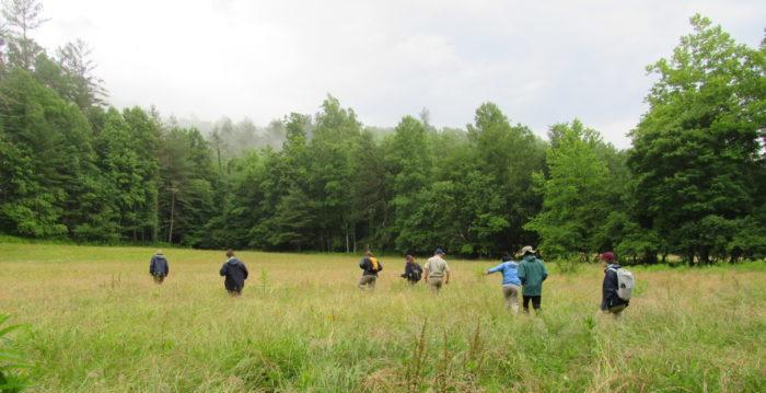 GSMNP interns searching for elk calf