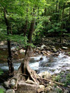 West Prong along Gatlinburg Trail