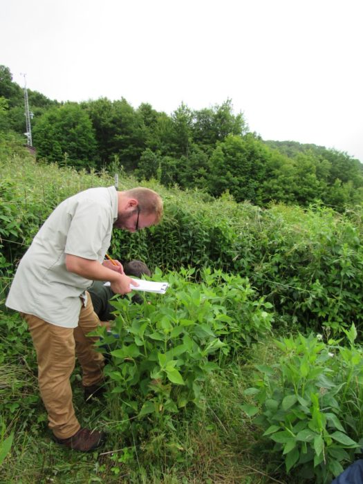 Joshua Robinson in GSMNP ozone garden