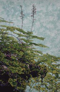Kathy McGhee's Heartlead Foamflower silkscreen print