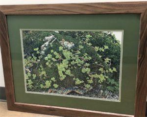 Kathy McGhee Stonecrop 1 framed print