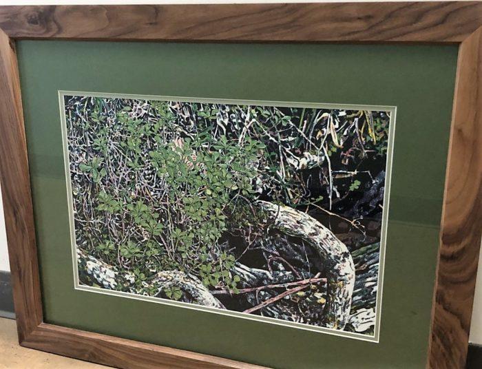 Kathy McGhee Stonecrop 2 framed print