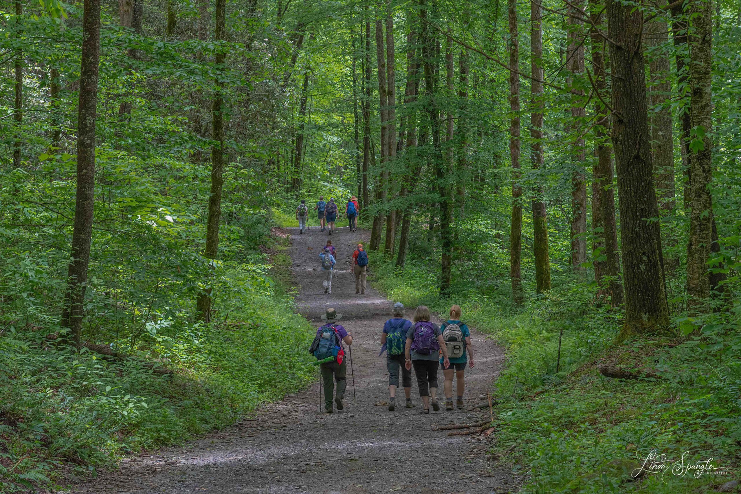 hikers on Smokemont Loop Trail