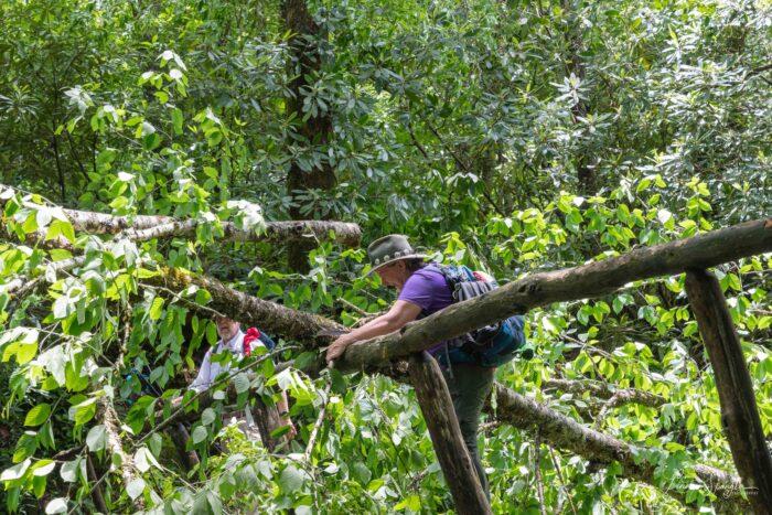 Lynda Doucette sawing fallen tree