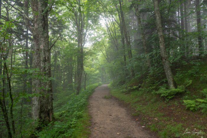 Flat Creek Trail in fog